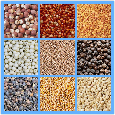 grain and other seed line